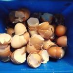 Eieren - calcium maken van eierschalen
