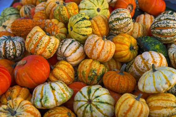 Lots of colorful pumpkins
