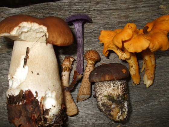 herfst - eetbare paddenstoelen - appelmuffins