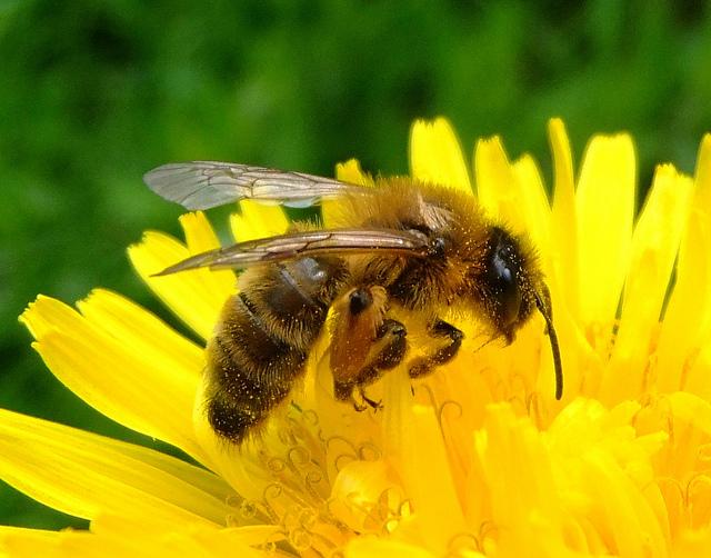 Bij Haalt Honing