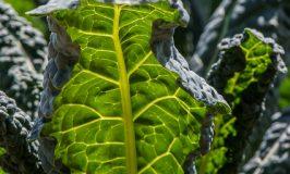 Palmkool Ribollita ~ een Heerlijke Maaltijd-Soep